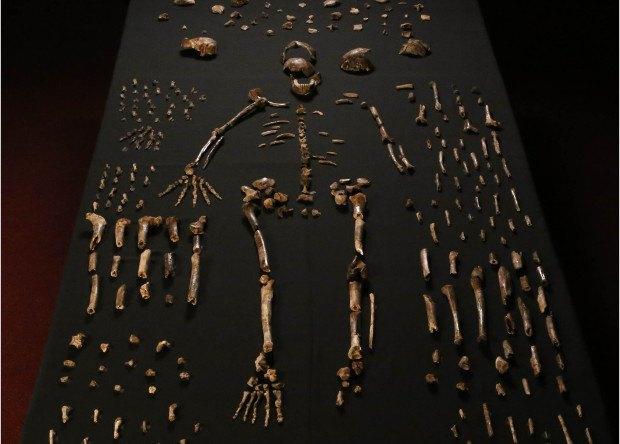 Антропологи описали новый вид человека . Изображение № 1.
