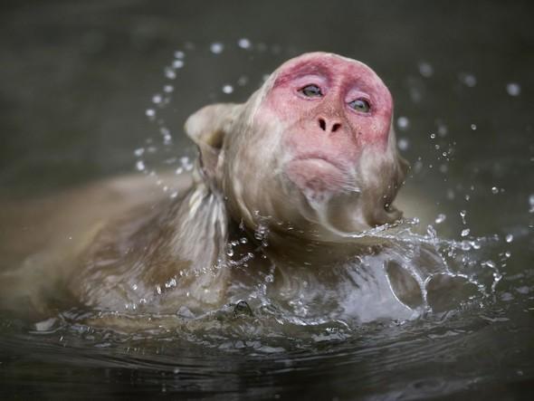 Лучшие снимки от National Geographic (золотой фонд). Изображение № 40.