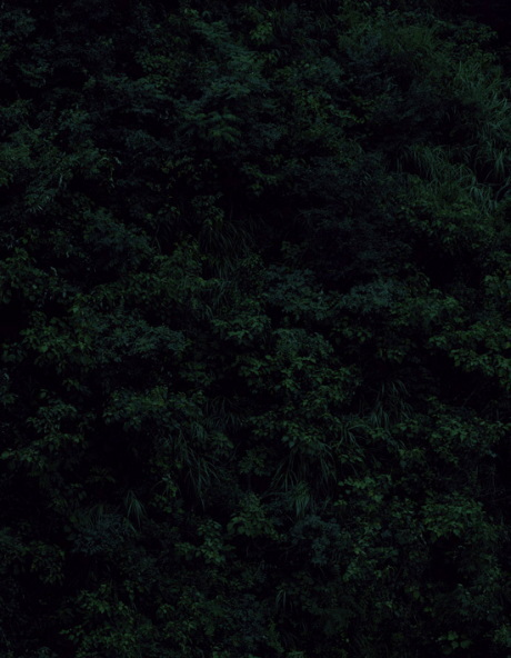 Темный лесКейты Сигиуры. Изображение № 11.