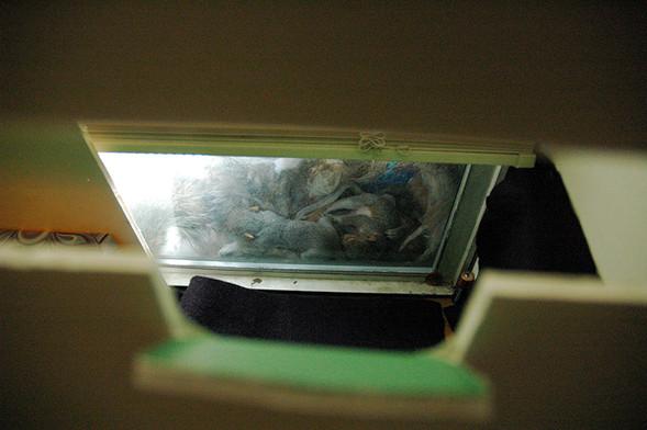 Белка в нашем окне. Изображение № 12.