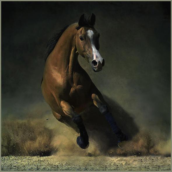 Фотографии лошадей Wojtek Kwiatkowski. Изображение № 6.