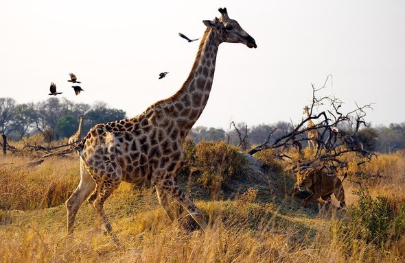 Фотоконкурс National Geographic 2010. Изображение № 1.