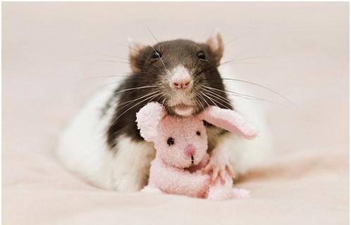 Фотосессия крысят отJessica Florence. Изображение № 10.