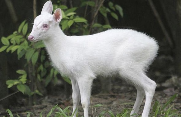 Животные-альбиносы. Изображение № 3.