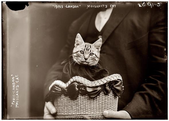 Фотографии с животными, начало прошлого века. Изображение № 10.