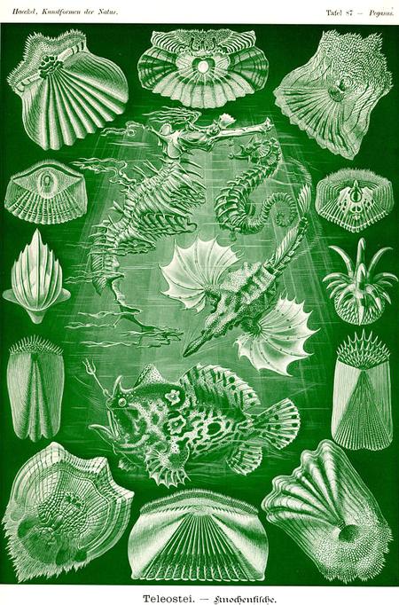 Причудливые формы природы. Изображение № 40.