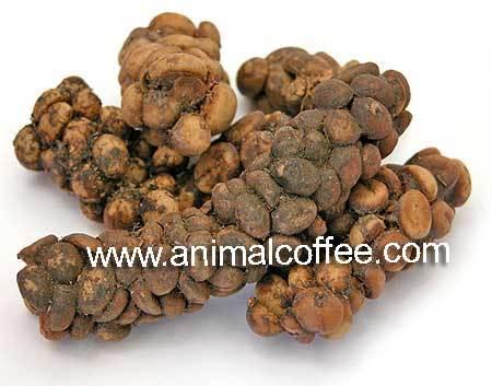 Процесс производства одного изэлитных сортов кофе. Изображение № 3.