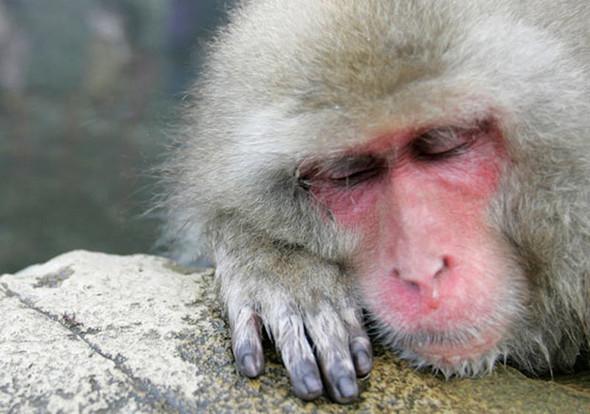 И даже обезьянам нужен отдых. Изображение № 12.