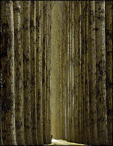 Фотография Ларса ван де Гоора. Изображение № 8.