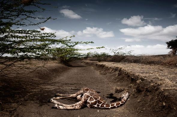 Подведение итогов. Лучшие фотографии 2009. Time. Изображение № 9.
