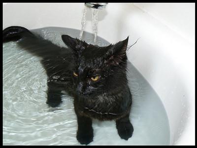 50 животных, которые ненавидят мыться. Изображение № 19.