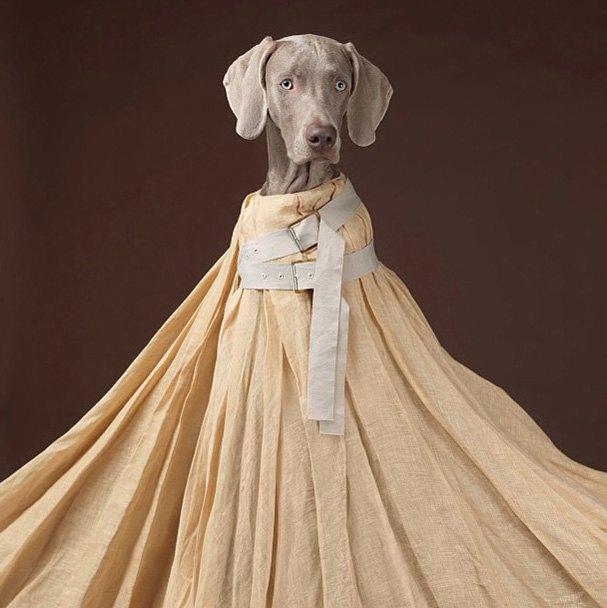 Acne одели собак в свою коллекцию. Изображение № 3.