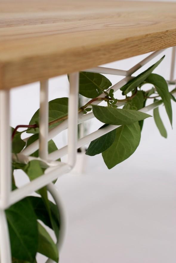 Огород под столом. Изображение № 3.