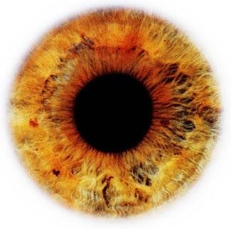Фотограф Rankin — Eyescapes. Изображение № 9.