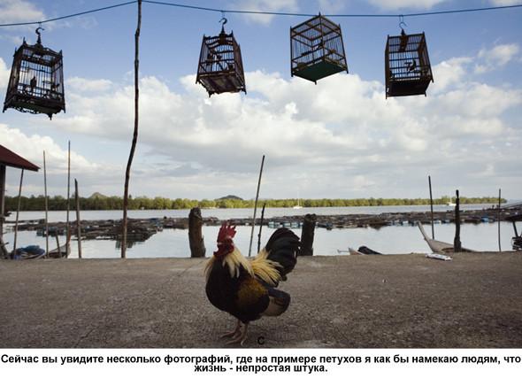 Фотограф – Виталий Шепелев. Изображение № 23.
