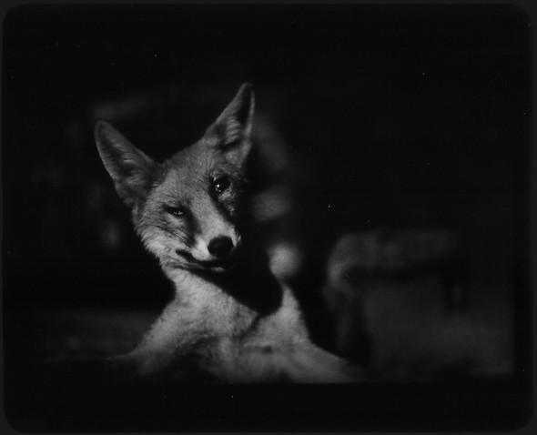 Джакомо Брунелли и«другие» животные. Изображение № 7.
