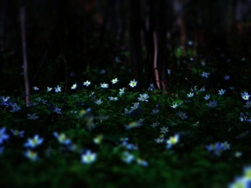 Весна в лесу. Изображение № 8.