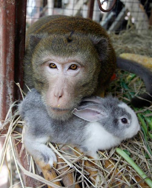 Дружба - она и у животных дружба!. Изображение № 12.