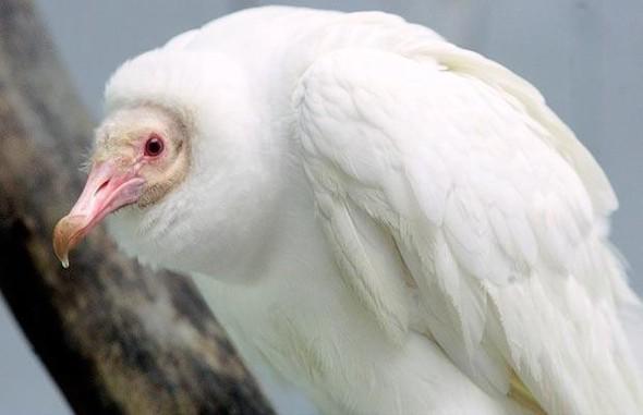 Животные-альбиносы. Изображение № 6.