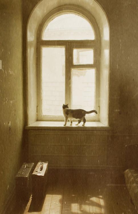 Блудливые коты. Изображение № 12.