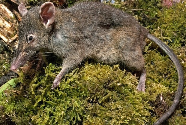 Как учёные находят новых животных: 10 недавно открытых видов. Изображение № 5.