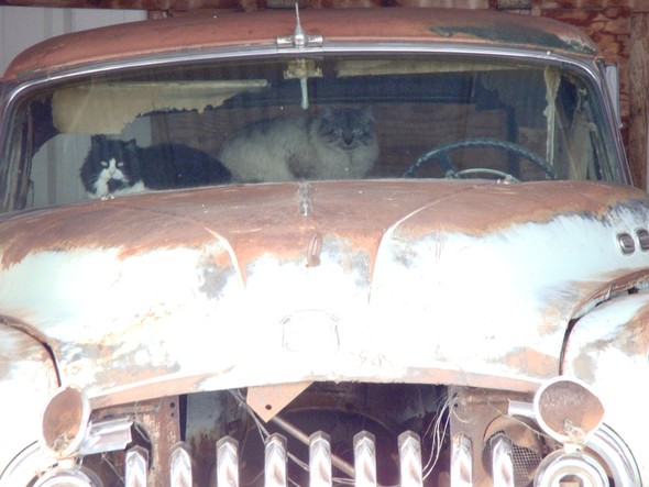 Котики и авто. Изображение № 21.