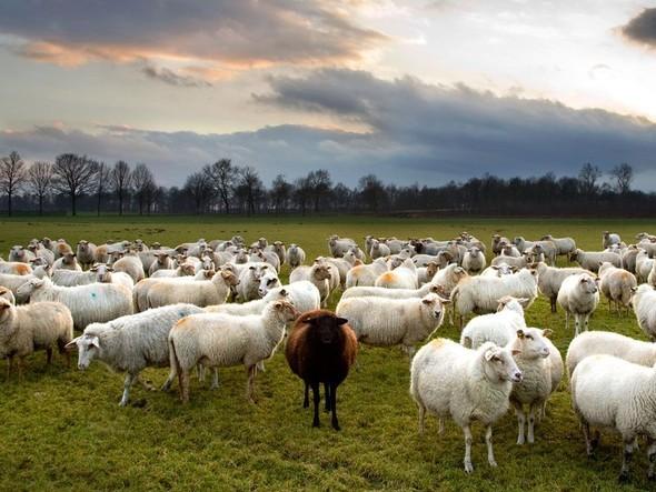 Лучшие снимки от National Geographic (золотой фонд). Изображение № 27.