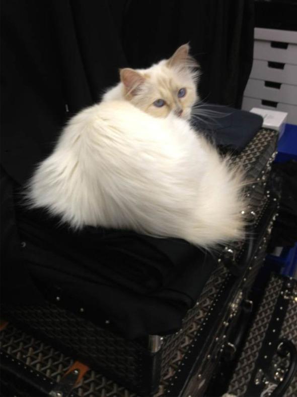 Кошка Карла Лагерфельда снялась для i-D. Изображение № 5.