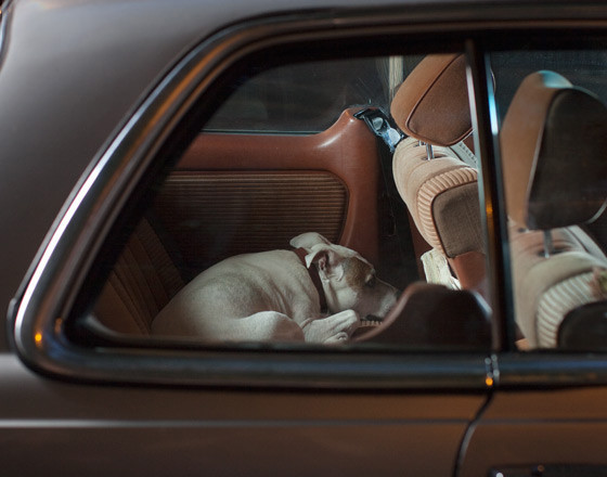 The silence of dogs in cars. Изображение № 6.