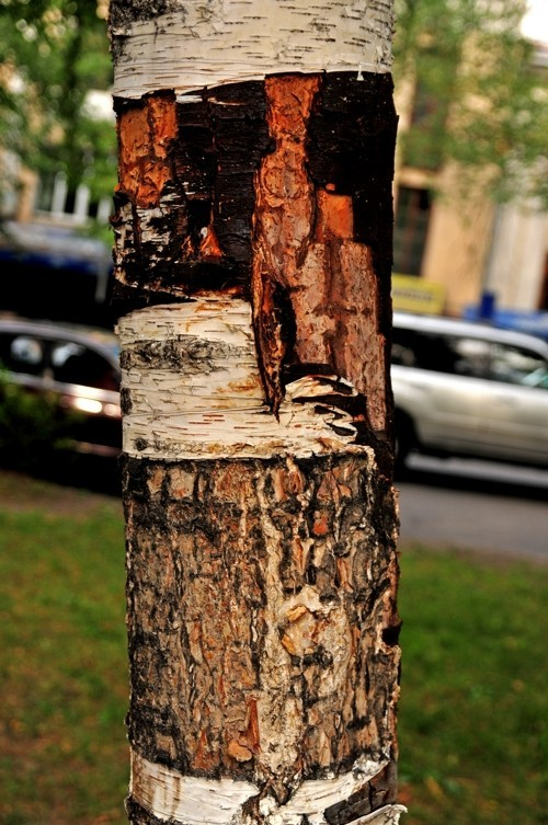 Treefilia. Изображение № 16.