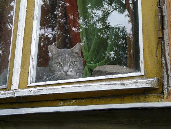 Cat. Window. Изображение № 39.