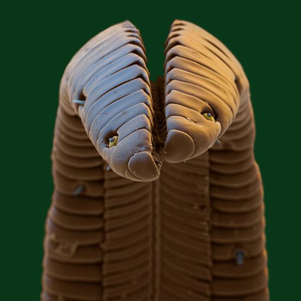Микрофотография. Изображение № 20.