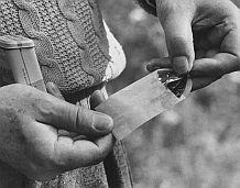 Признания человека-мотылька. Владимир Набоков. Изображение № 10.