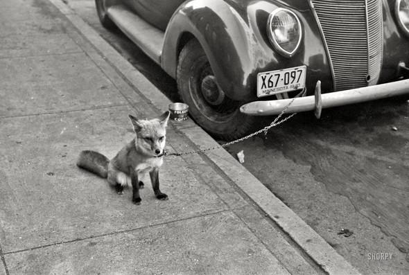Фотографии с животными, начало прошлого века. Изображение № 14.