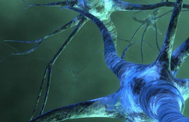 Почему я не хочу ничего знать о мозге (иногда). Изображение № 1.