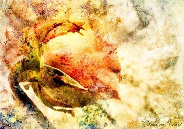 Время цветения. Изображение № 1.
