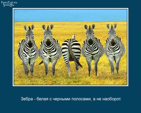 Животные иинтересные факты оних. Изображение № 20.