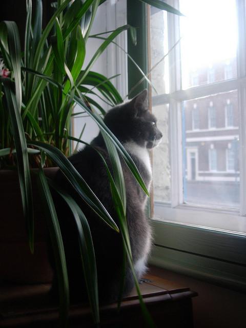 Cat. Window. Изображение № 10.
