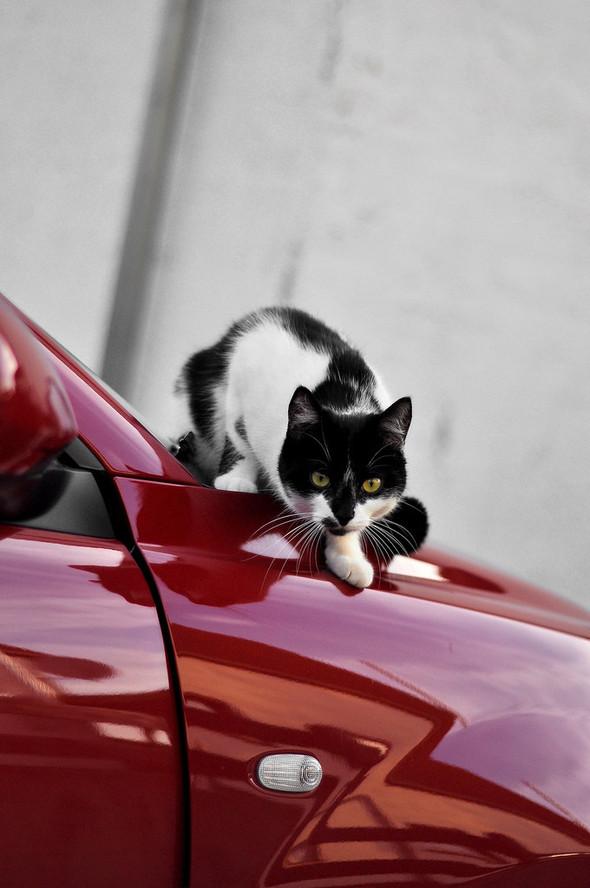 Котики и авто. Изображение № 18.