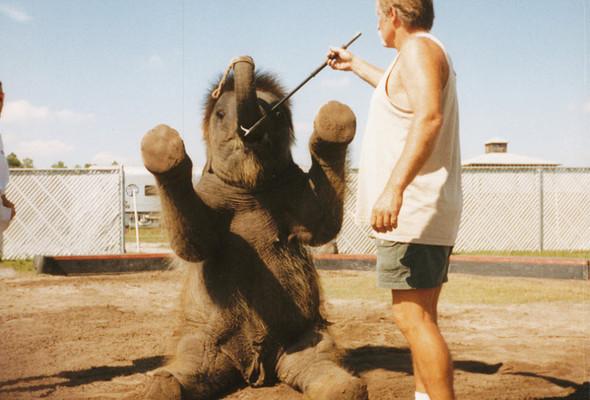 Печальное закулисье цирка Ringling Bros. Изображение № 13.