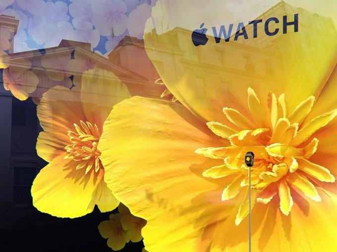 Для Apple Watch оформили цветами витрину Selfridges . Изображение № 5.