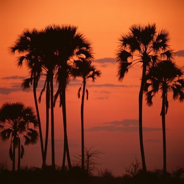 Ботсвана. Изображение № 15.