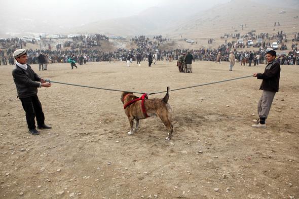 Афганистан. Военная фотография. Изображение № 242.
