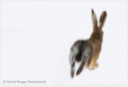 Победители Wildlife Photographer 2008. Изображение № 67.