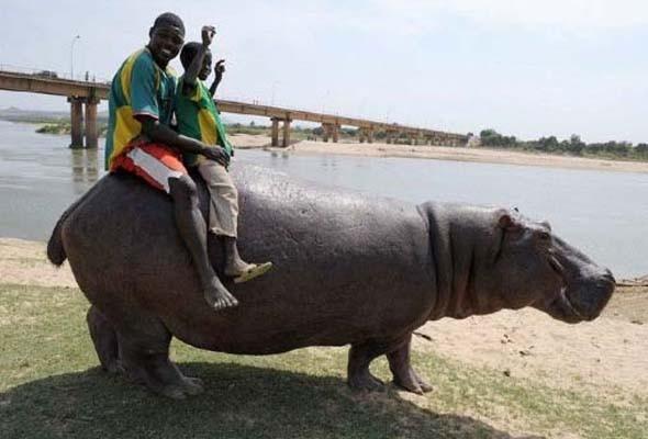 В мире животных: Герои «Мадагаскара» в мемах, рекламе и видеороликах. Изображение № 21.