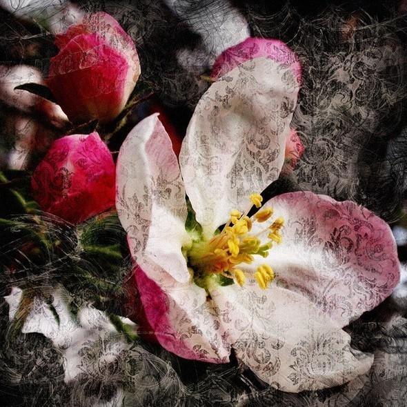 Время цветения. Изображение № 12.