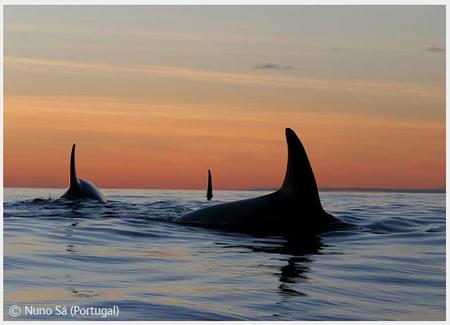 Победители Wildlife Photographer 2008. Изображение № 62.