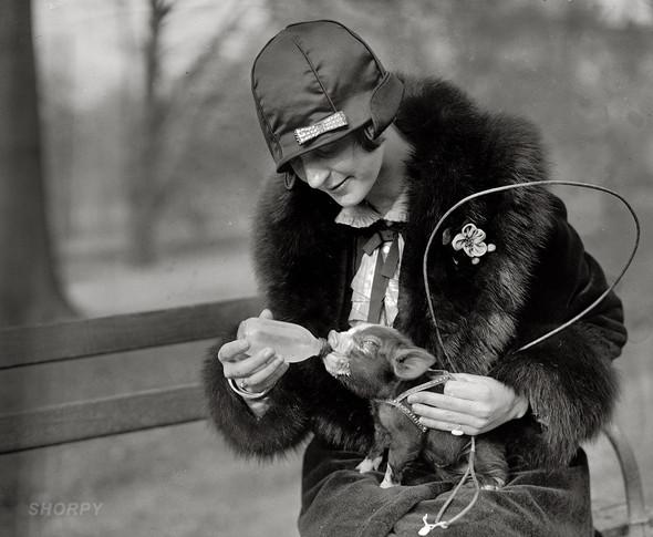 Фотографии с животными, начало прошлого века. Изображение № 11.