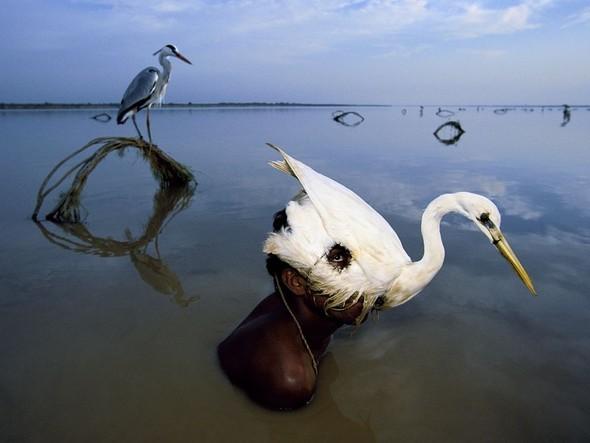 Лучшие новые снимки от National Geographic. Изображение № 4.