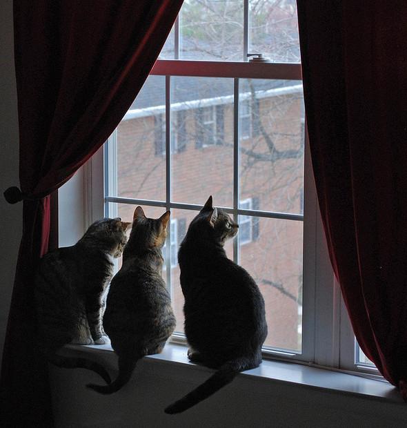 Cat. Window. Изображение № 49.